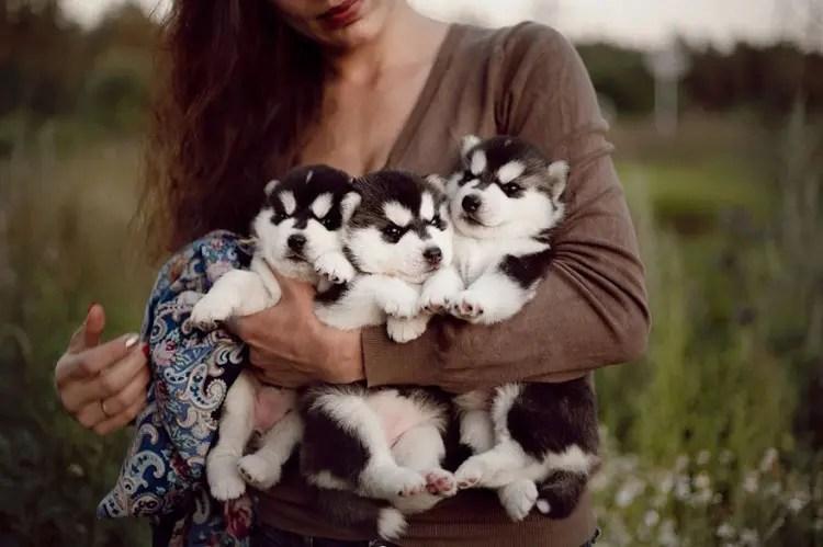 siberian-husky-dog-instagram-erica-tcogoeva-70