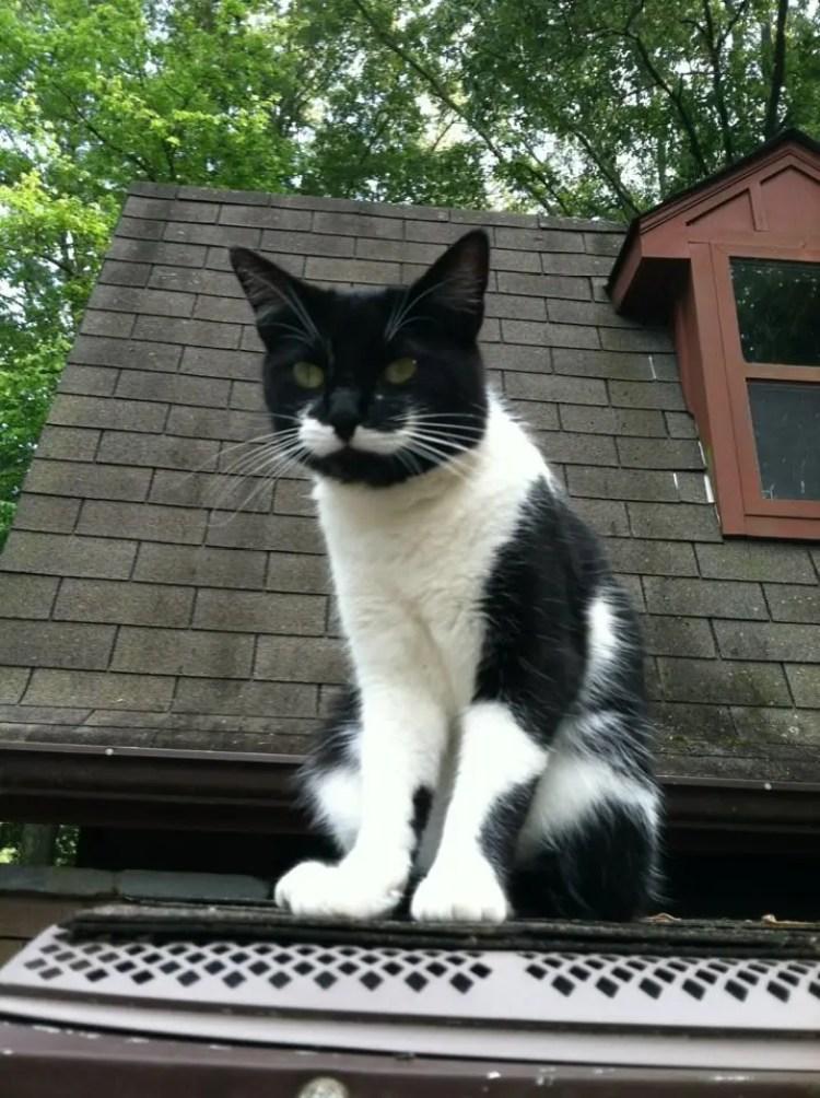 gatos con bigote 4