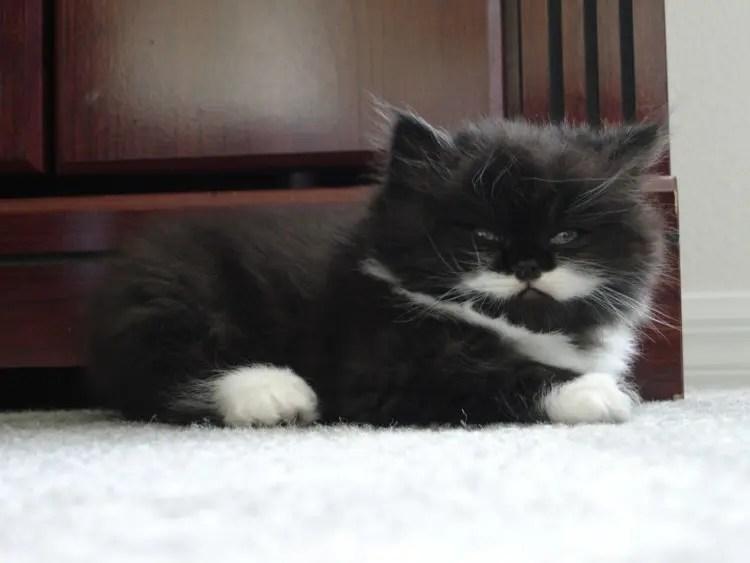 gatos con bigote 9