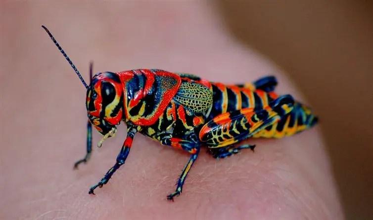8animales-coloridos-increibles
