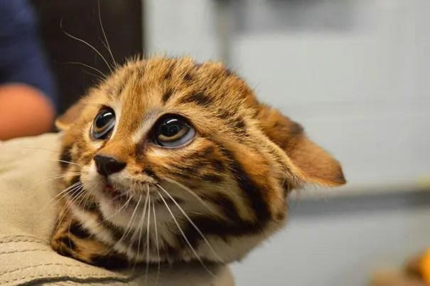 adorables animales bebe 17
