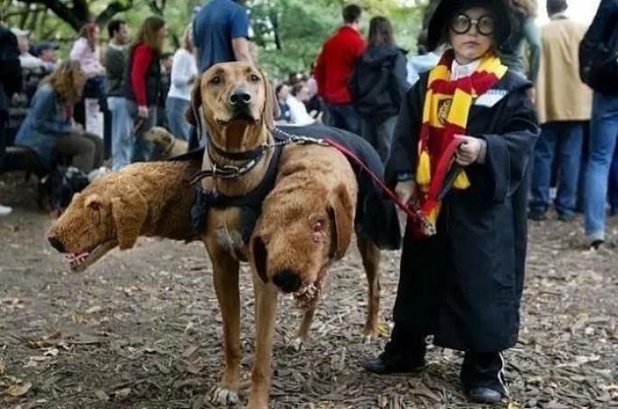 disfraces-halloween-ninos-mascotas10