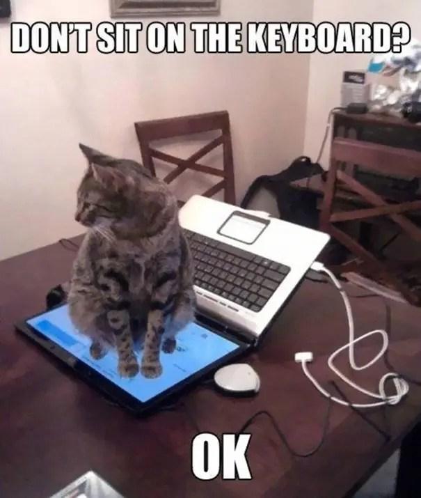 logica de gatos 8