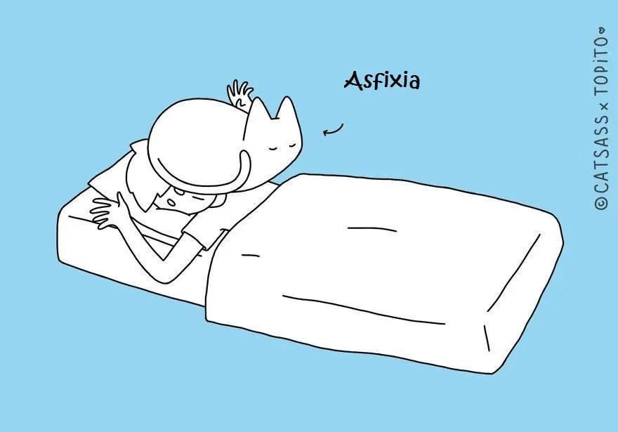 10-posiciones-para-dormir-con-tu-gato5