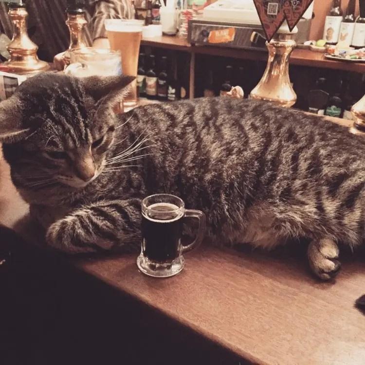 bar de gatos 8