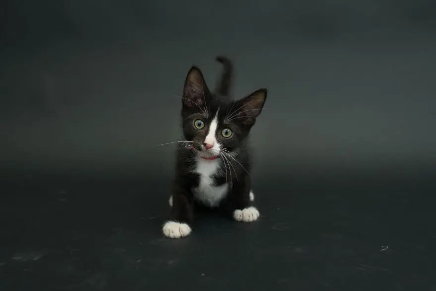 gatos negros adopcion 4