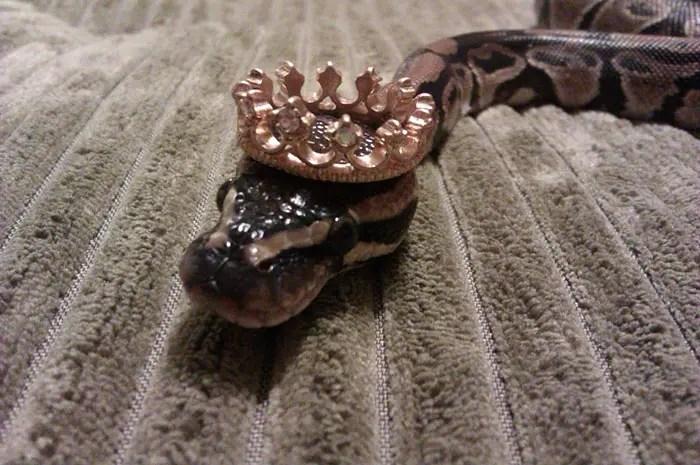 sombreros serpientes 10