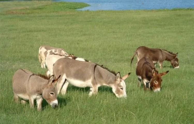 13-razones-para-tener-un-burro-bebe10