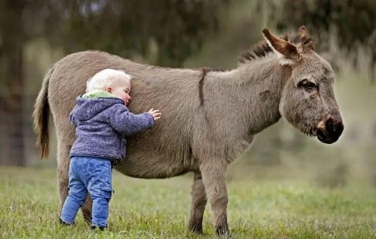 13-razones-para-tener-un-burro-bebe12