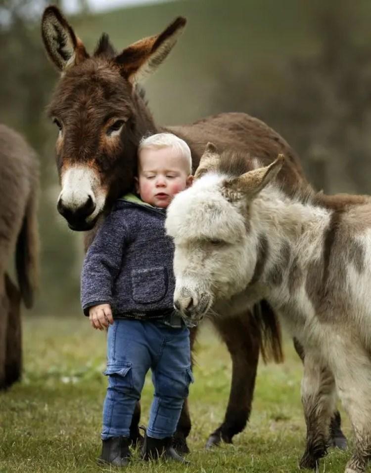 13-razones-para-tener-un-burro-bebe6
