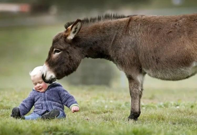 13-razones-para-tener-un-burro-bebe9