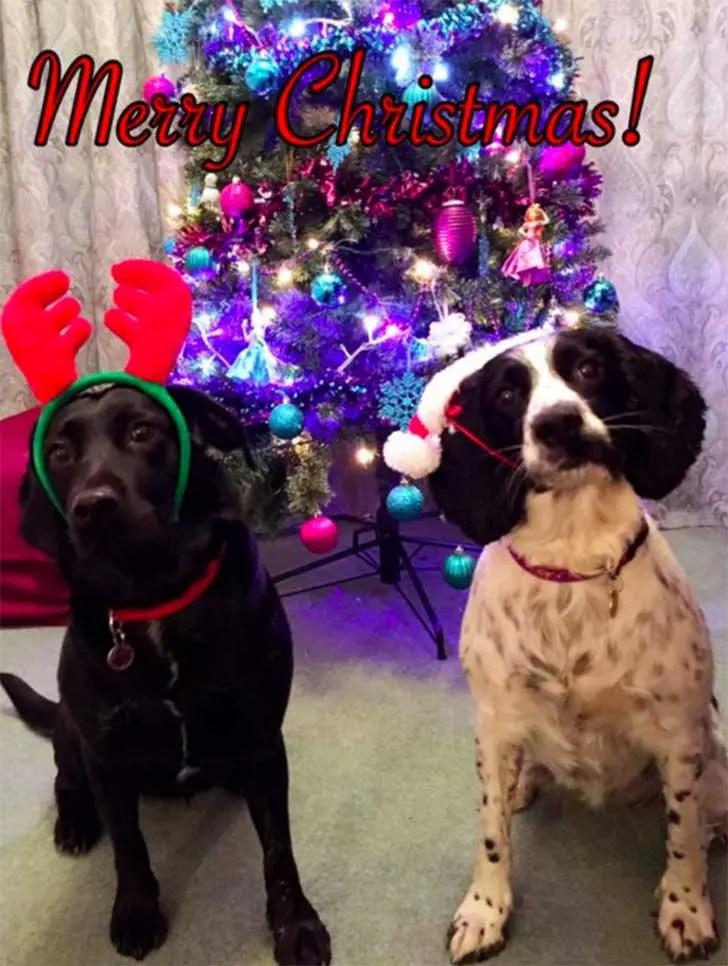 familia-perros-navidad6