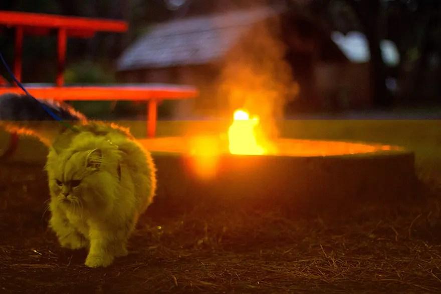 gandalf el gato 10
