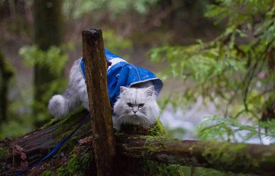 gandalf el gato 7