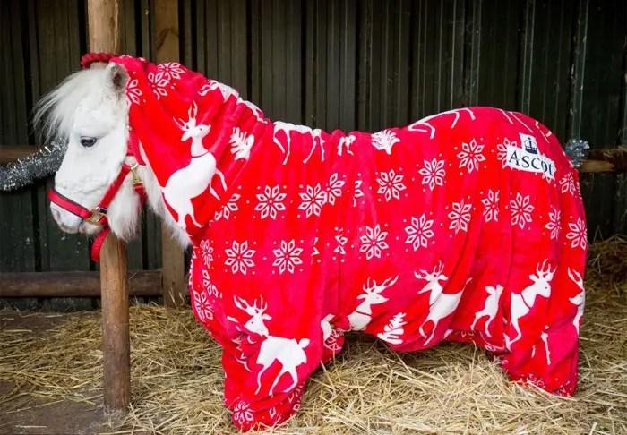 hacen-abrigo-para-su-pony7