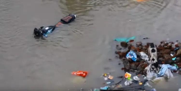 perro-rescata-sus-cachorros-en-inundacion-india4