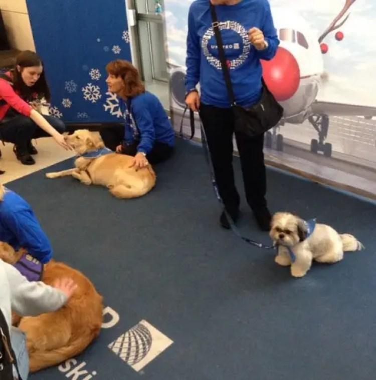 utilizan-perros-para-calmar-pasajeros-nerviosos10