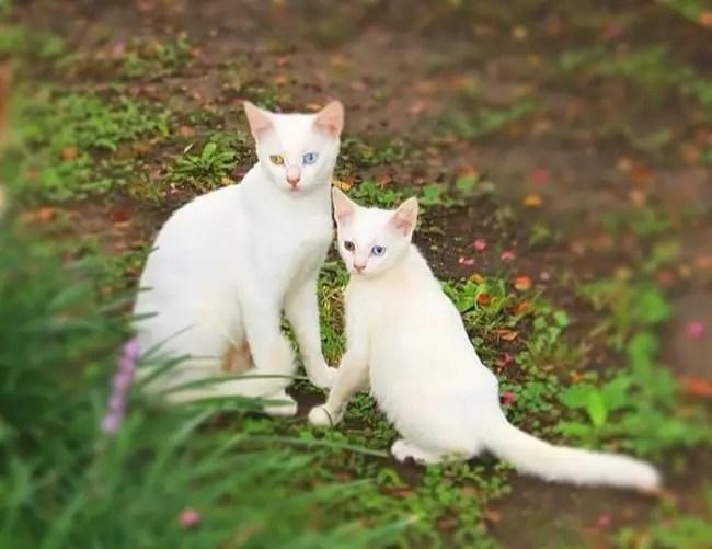 gatos y miniaturas 10