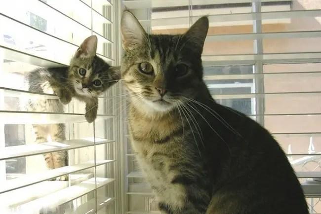 gatos y miniaturas 3