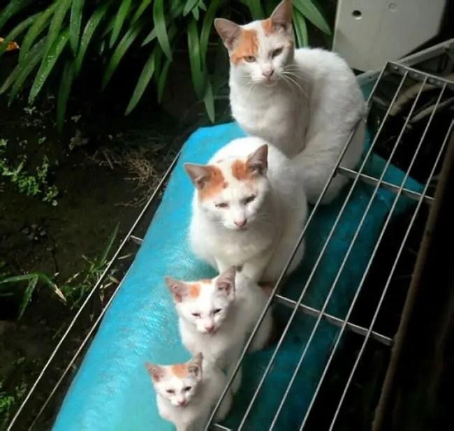 gatos y miniaturas 4