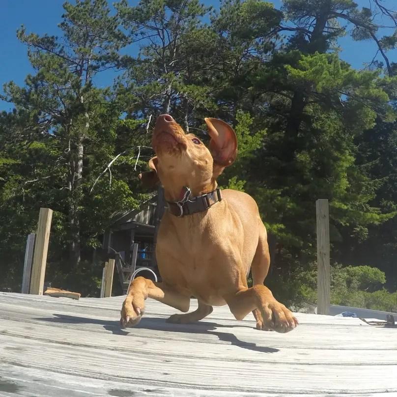 perros graciosos 15