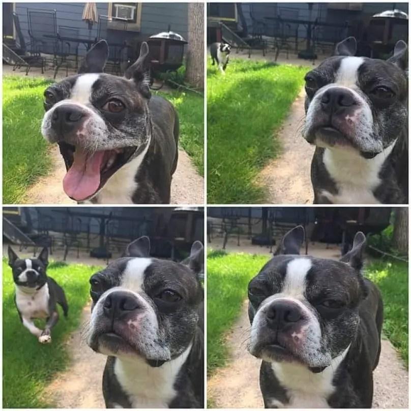 perros graciosos 7