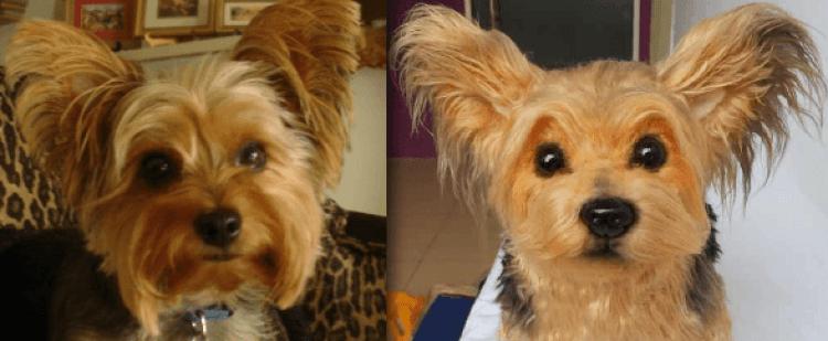 perritos-clonados-en-peluche-8