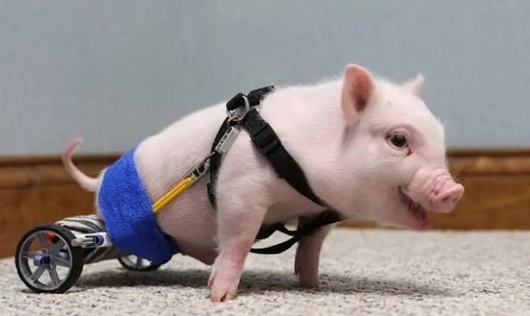 sorprendentes-animales-con-discapacidades-10