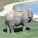 National Zoological Park – Smithsonian Institute : Washington DC