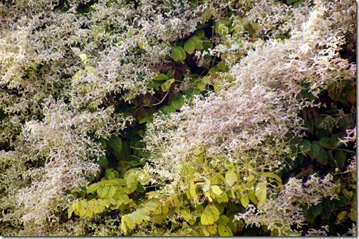 Fairchild Tropical Botanical Gardens - Miami (11)