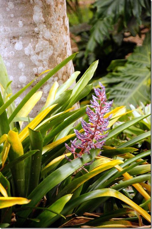 Fairchild Tropical Botanical Gardens - Miami (46)