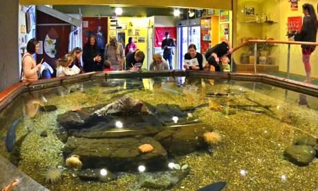 Velkommen til opplevelser i Akvariet i Drøbak!