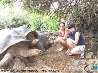 Galapagos tortoises in Santa Cruz Galapagos Islands - Ecuador © Cristina Pettersen Carpio Tobar