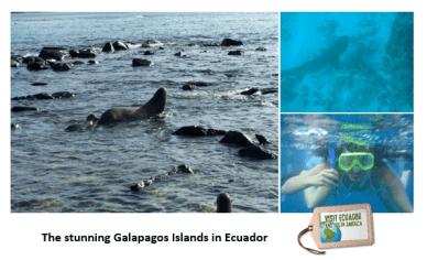 Galapagos encounter endemic species Photo: Carmen Cristina Carpio Tobar