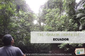 the-amazon-rainforest-unmatched-diversity-and-scenery-in-south-america