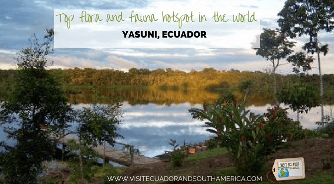 yasuni-national-park-top-flora-and-fauna-hotspot-in-the-world