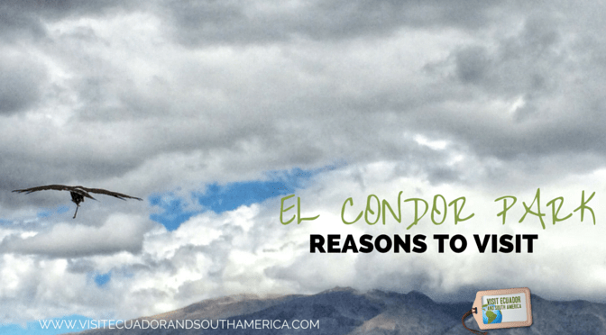 reasons-to-visit-parque-condor-in-ecuador