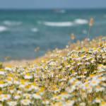 Gabriele Cocchino Casalbordino - tra mare, natura e trabocchi