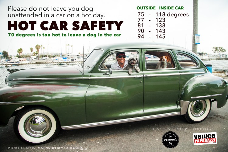 DOG SAFETY