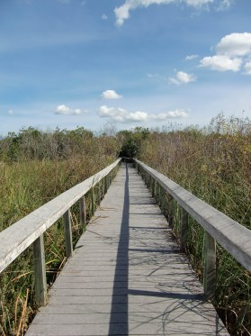 Walk through the Everglades