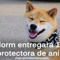 BENIDORM-ENTREGARA-DINERO-PROTECTORA-DE-ANIMALES