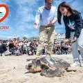 tortuga-vuelve-al-mar-benidorm-1