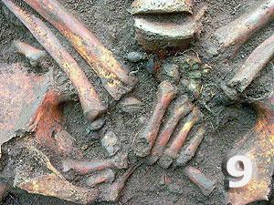 Fundstelle 392; Detailfoto der Perlen und Bronzeelemente im Handbereich (übereinander gelegt) der Bestattung 392 (Bild 10) evtl. eine Paternosterkette?
