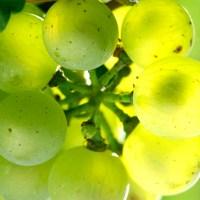 Borgogna: il meglio dei vini bianchi francesi (4° puntata)