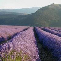 Itinerari lavanda (2° puntata): nei borghi della Drôme provenzale