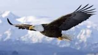 eagle flying on top of the clouds