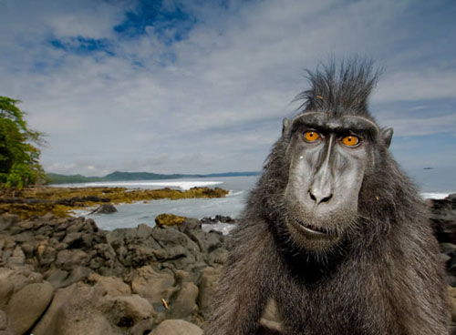 Premios Wildlife Photographer of the Year 2008