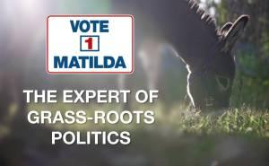 Expert of grass-roots politics