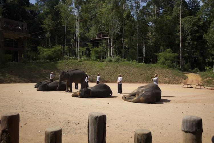 kenyir elephant malaisie