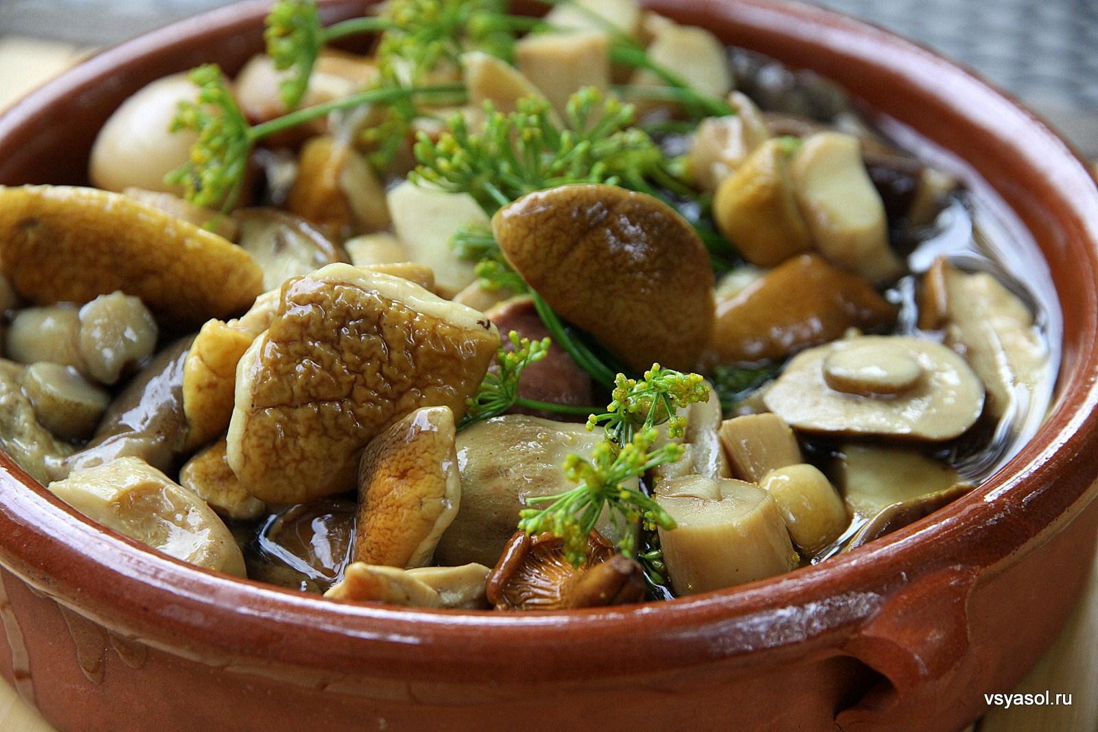Вкусные рецепты из грибов